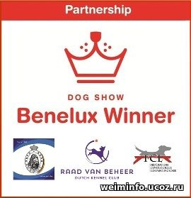 BENELUX WINNER NL 2018 (Weimaraner, short-haired)