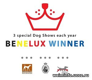 BENELUX WINNER NL  (Weimaraner, long-haired)